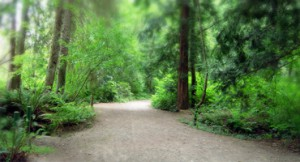 Forest path way