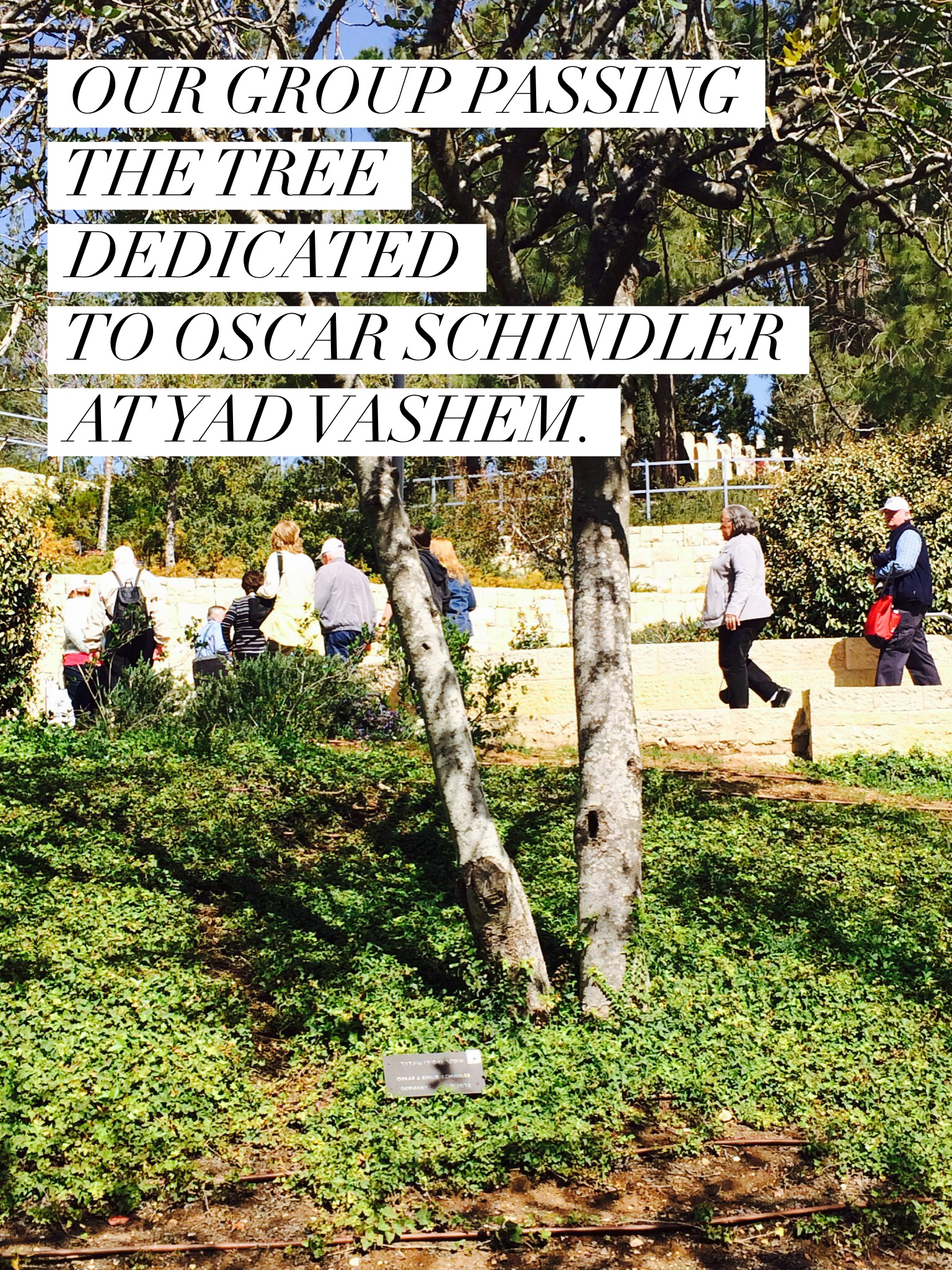 Our group passing the tree dedicated to Oscar Schindler at Yadvashem